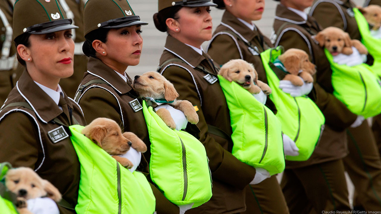 Chilean police officers march with puppies, future police dogs, during the celebration parade of Chiles 208th Independence anniversary in Santiago on September 19, 2018.