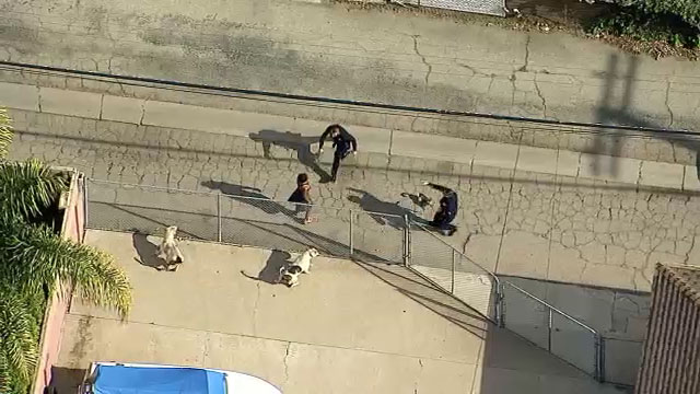 Officers arrested an assault suspect after she tried to flee on foot following a car chase through the San Fernando Valley.