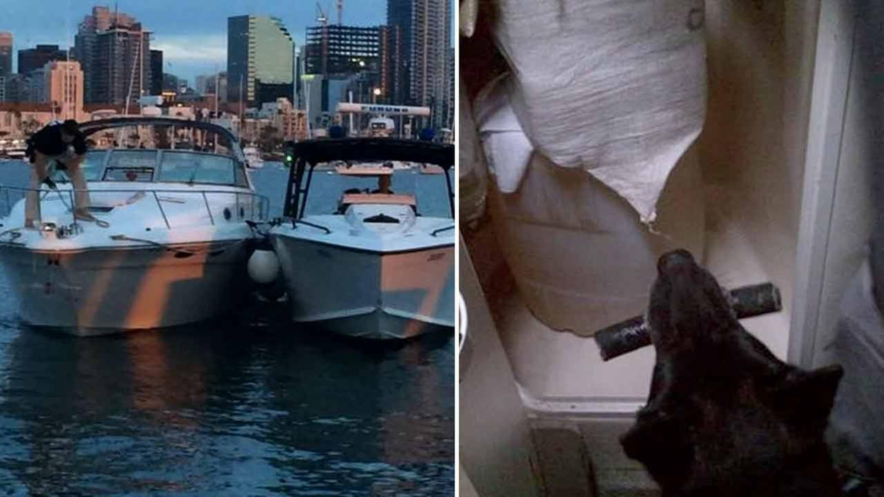 U.S. Border Patrol dogs helped seize thousands of dollars worth of marijuana from a private boat in San Diego Monday, Sept. 21, 2015.