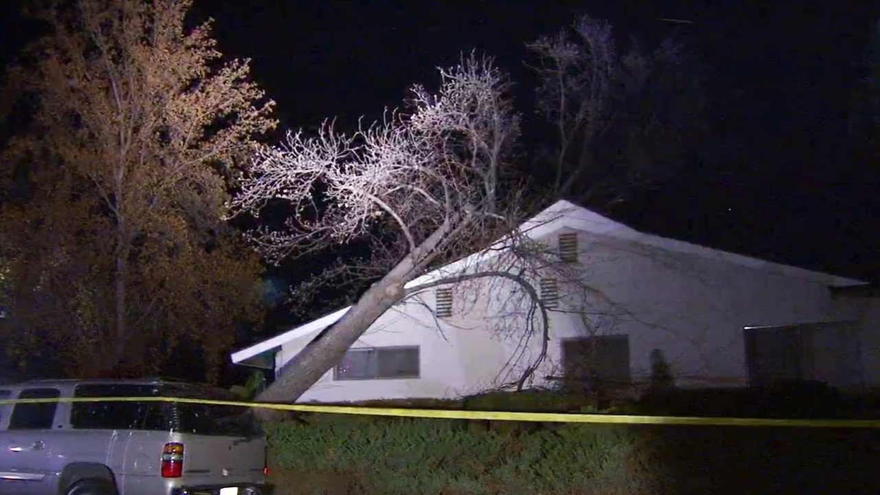 A tree fell onto a home in the 16000 block of Dearborn Street in the North Hills area of Los Angeles on Thursday, Oct. 29, 2015.