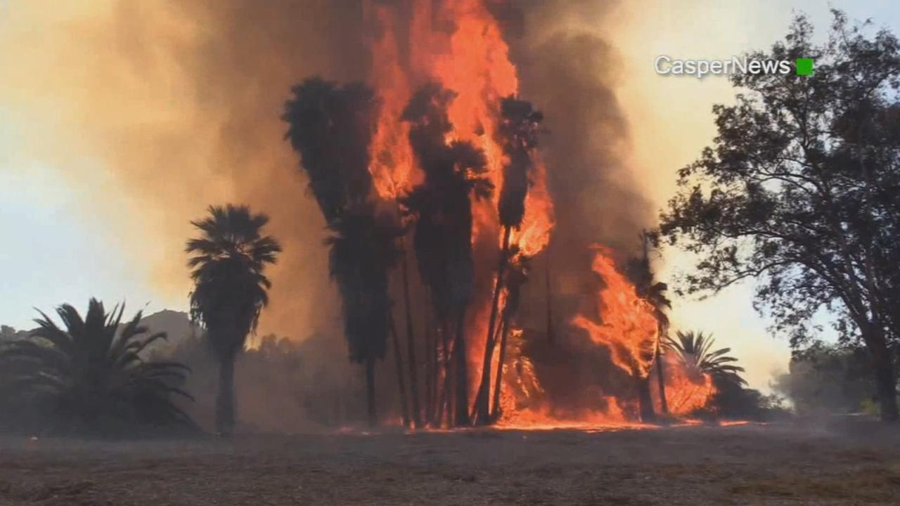 A fire burns palm trees in the Santa Ana Riverbed near the 2600 block of Fairmount Boulevard in Riverside on Saturday, Oct. 31, 2015.