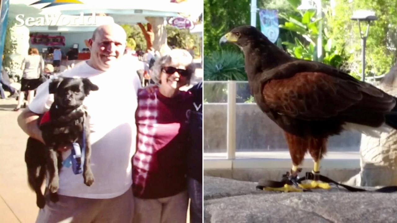 Robin Revel, his wife Janet and their dog Yogi is shown in an undated photo alongside an image of the hawk suspected of attacking Yogi at SeaWorld.