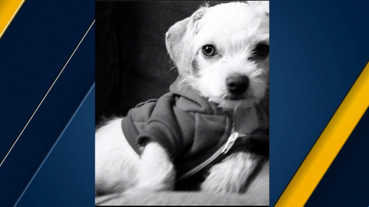 A picture of Emily Lane, Juan Cruzs dog he said was stolen in front of the W Hollywood Hotel.
