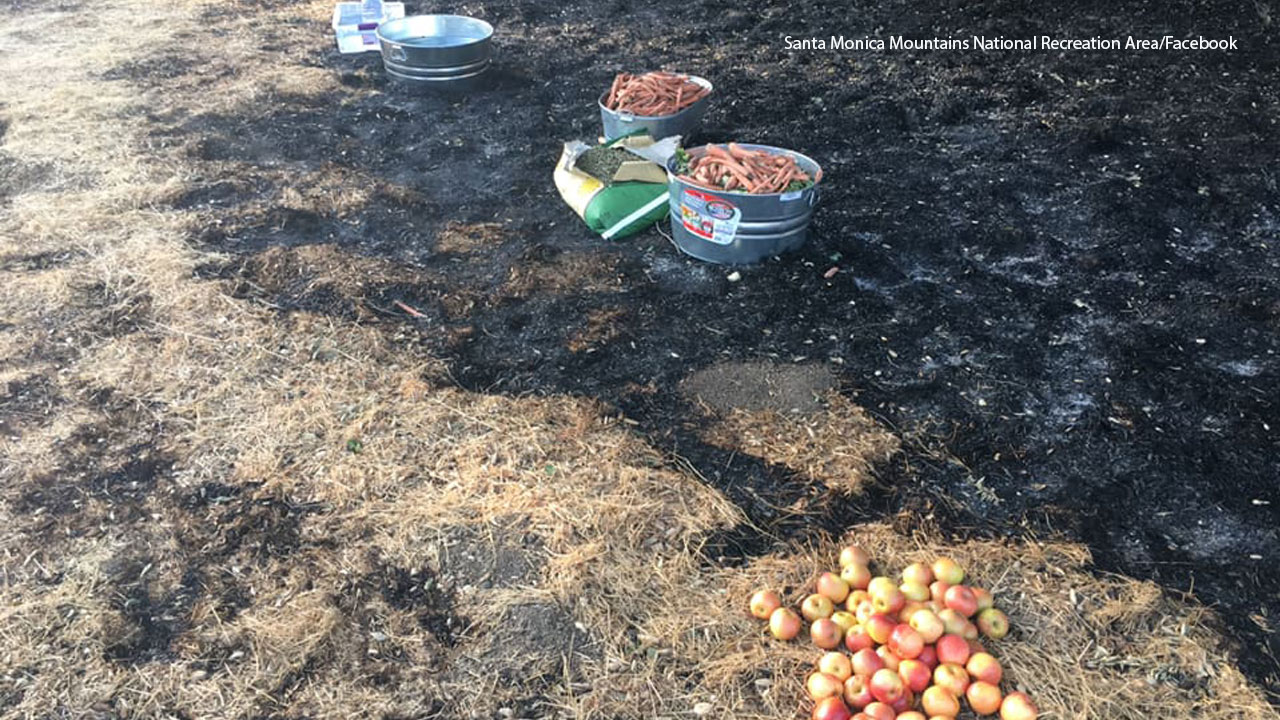 A photo shows food being displayed for animals in a burn area hit by the Woolsey Fire.
