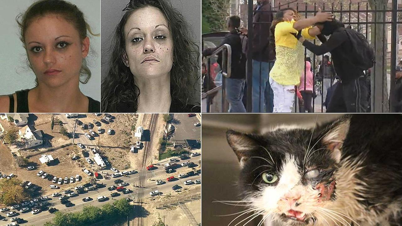 Top 10 Stories of 2015 on abc7.com