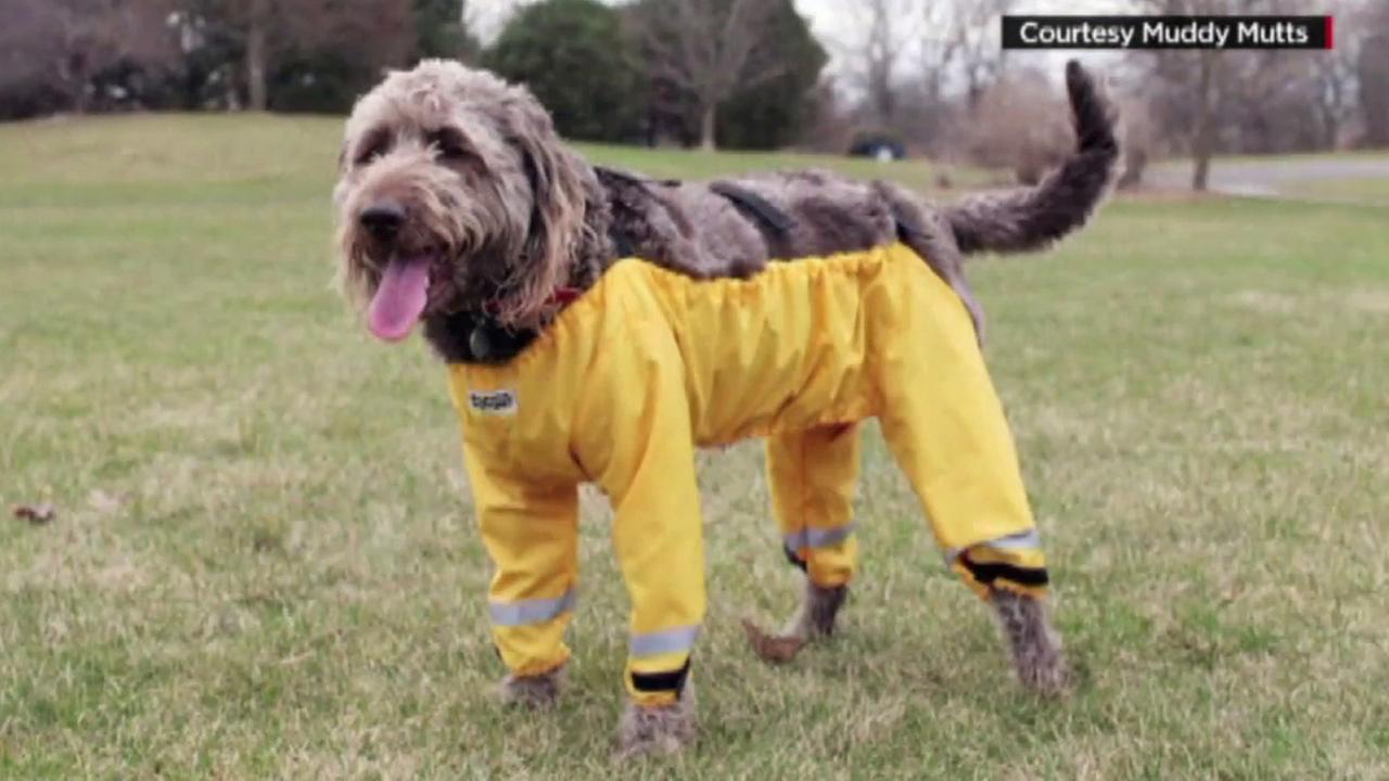 A dog is shown in Muddy Mutts pants in an undated photo.