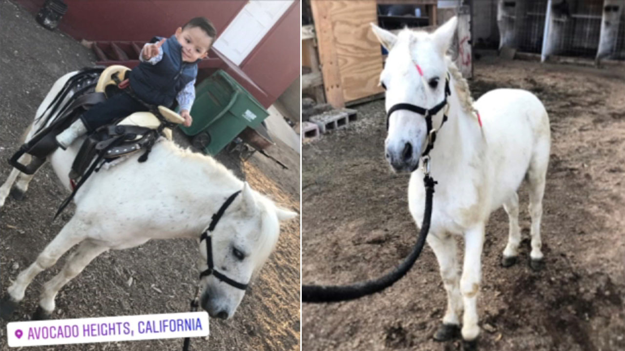 These are undated photos of Poncho, a pony who vanished from La Puentes Avocado Heights.