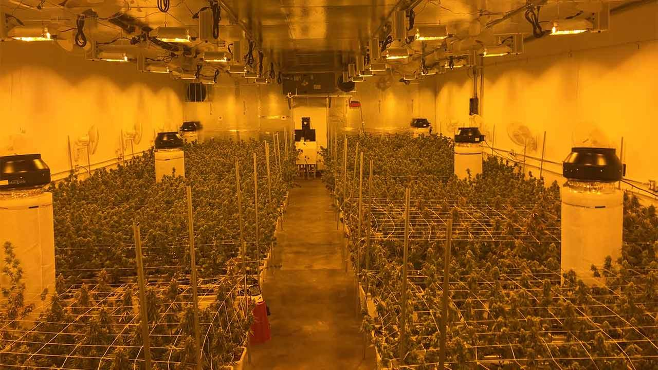 Montebello police discovered a marijuana growing operation at a commercial property in the 3300 block of W. Beverly Boulevard Tuesday, Feb. 23, 2016.