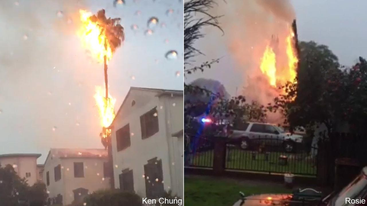 ABC7 viewers Ken Chung shared these images of trees fires sparked buy lightning strikes in Koreatown, left, and Compton, right, on Monday, March 7, 2016.
