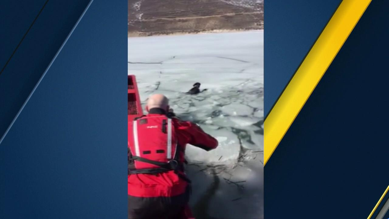 Volunteers with the Utah County Sheriffs Office rescued a dog from icy waters at the Deer Creek Reservoir on Friday, March 4, 2016.