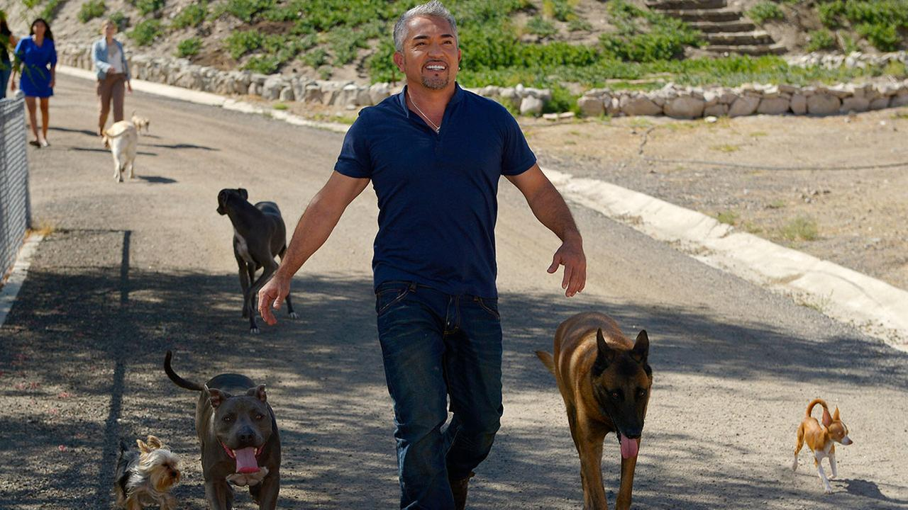 In this Oct. 18, 2012 photo, Cesar Millan walks down to his horse stables with his dogs at his Dog Psychology Center, in Santa Clarita, Calif.