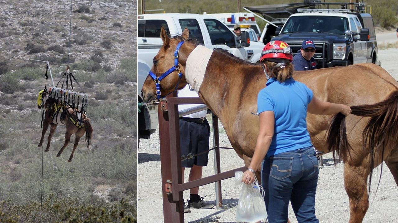 Horse rescued from ravine near Palm Springs after falling from trail