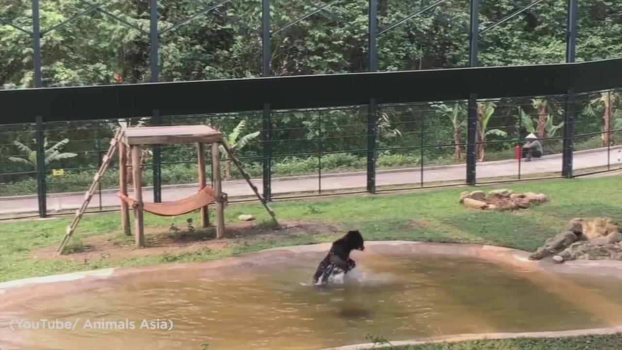 A bear who was rescued from a bile farm was caught on camera jumping for joy while taking a dip in a pool in Vietnam for the first time.