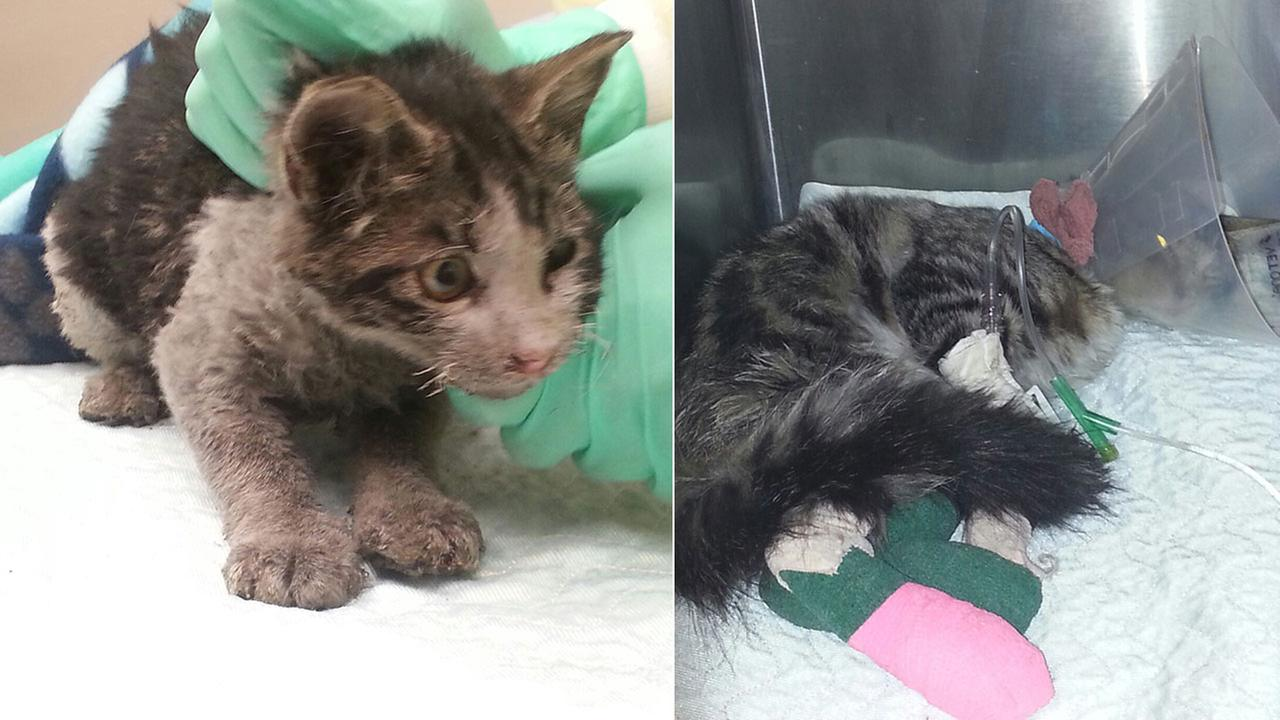 Burned, dehydrated kittens rescued from the Blue Cut Fire are being treated at the Parkview Pet Clinic in Glendale.