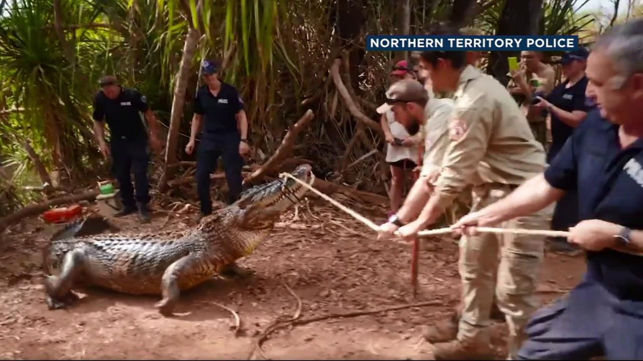 Police and wildlife officials in the Australian outback had their hands full as they wrangled a 14-foot-crocodile that farmers said had been eating their cattle.