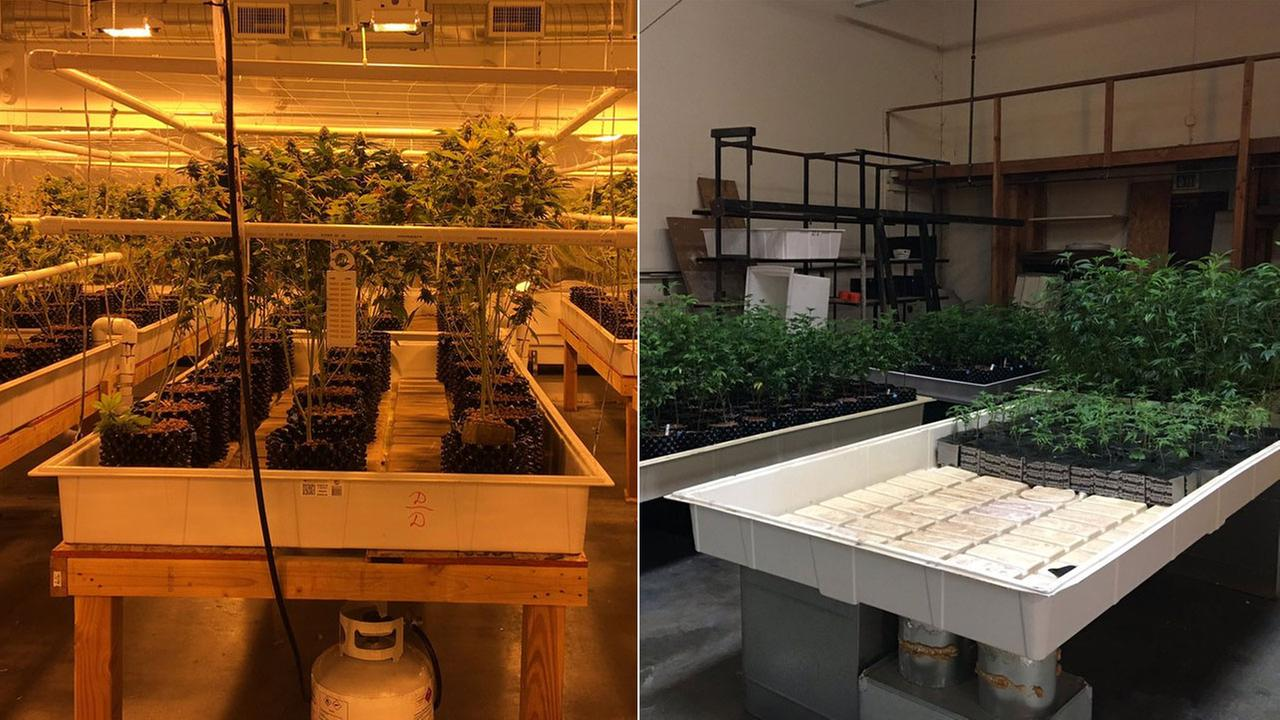 The Los Angeles County Sheriffs Department released these photos from the site of a major marijuana bust in unincorporated Los Angeles County on Wednesday, Oct. 5, 2016.