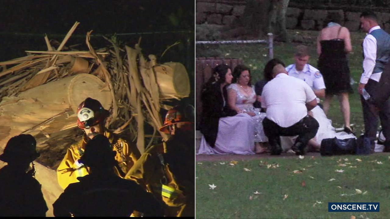 Members of a wedding party huddle together after a woman was killed and several others were injured after a tree fell in a park in Whittier on Saturday, Dec. 17, 2016.
