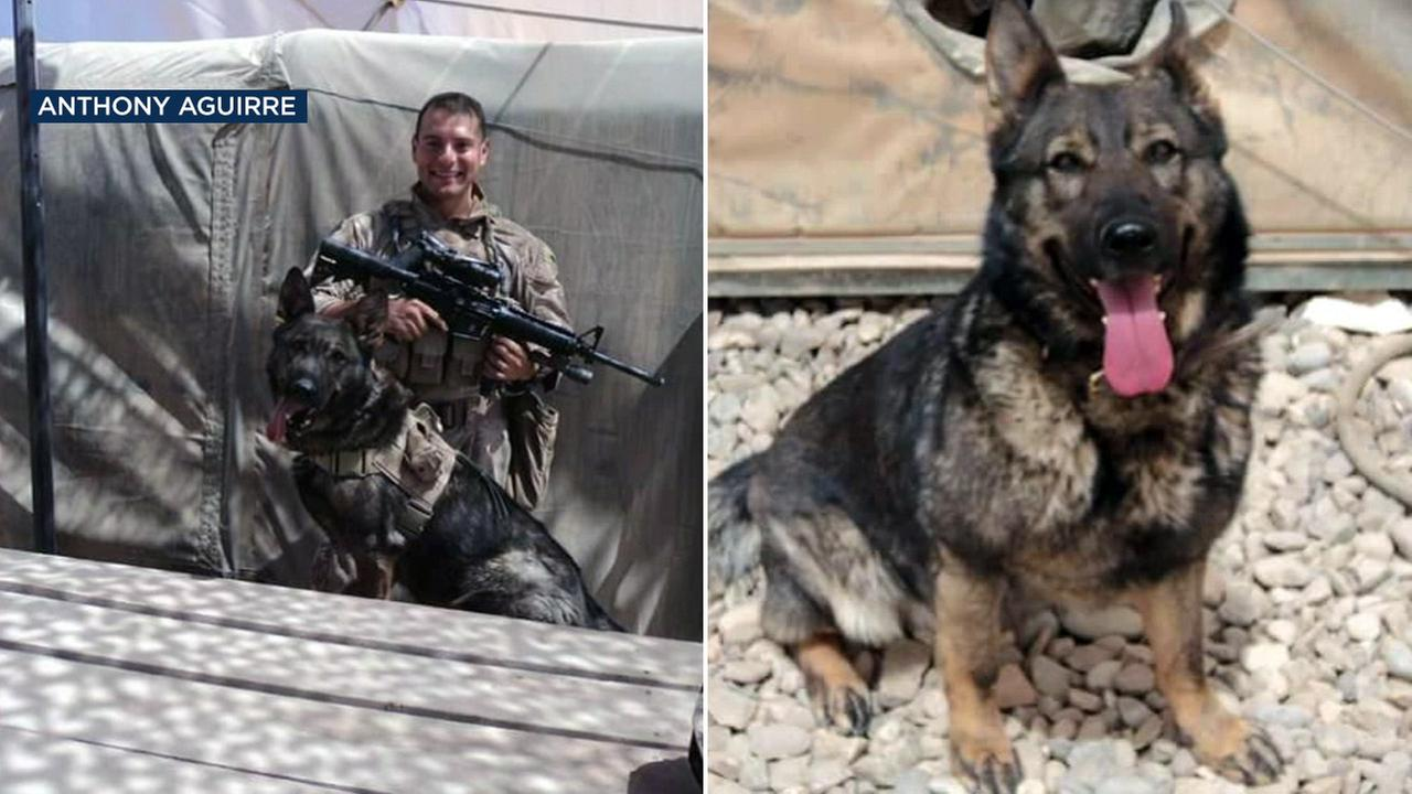 Anca, a retired military dog, went missing from her home in Sylmar, Los Angeles, on Tuesday, Dec. 27, 2016.