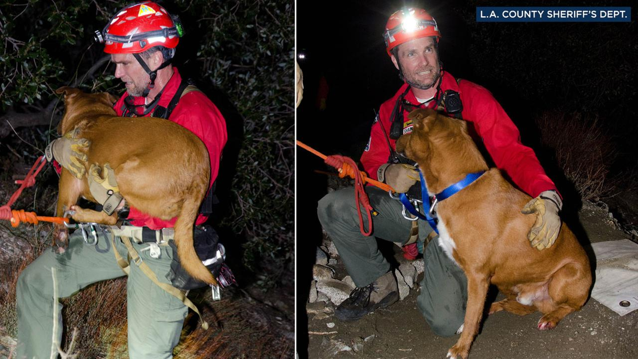 A rescue crew member is shown with Zeus, a 40-pound pit bull mix, secured in a rope harness as hes rescued in the Angeles National Forest on Friday, Feb. 24, 2017.