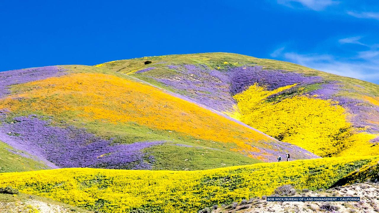 A breathtaking picture captures the beauty of the super bloom at Carrizo Plain National Monument in Santa Margarita, Calif.