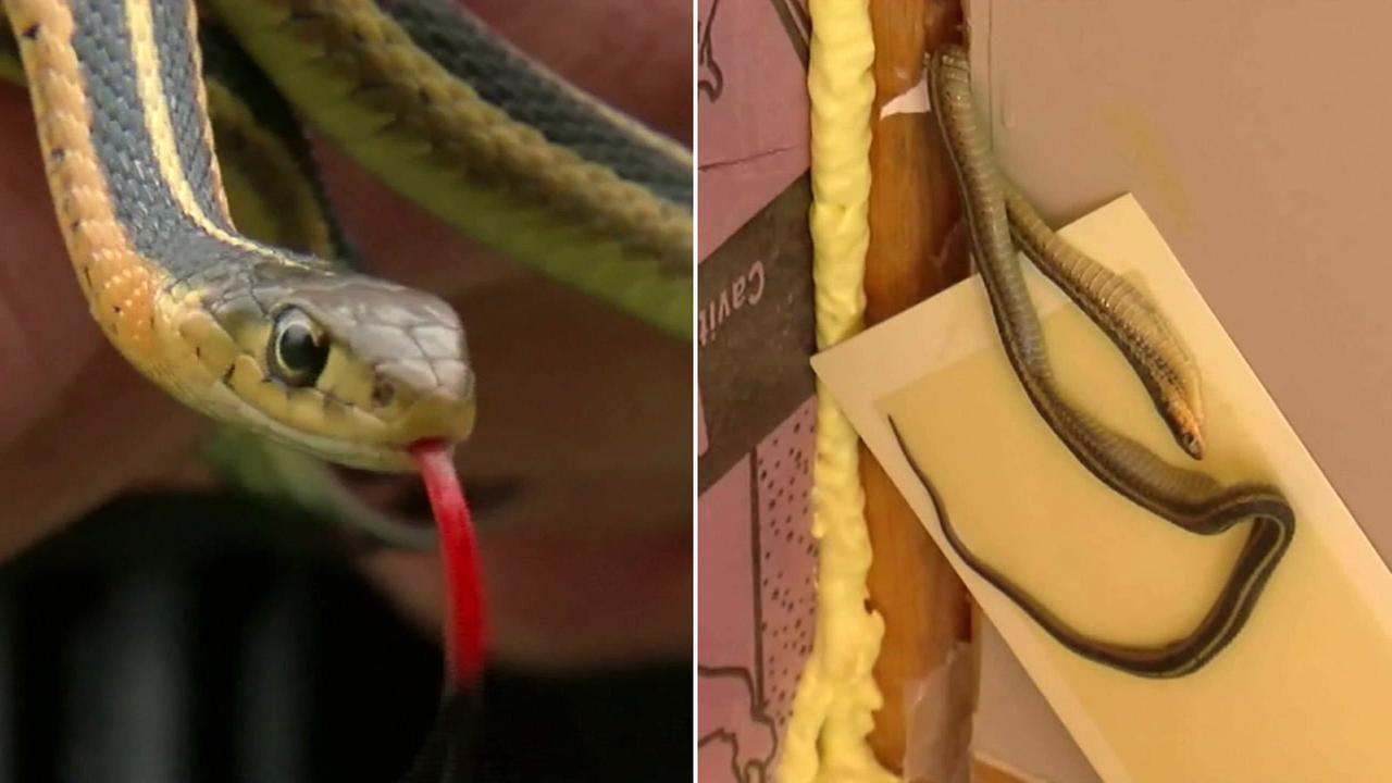Angie Whitley said she unknowingly moved into a snake-infested home in Oak Park Heights, Minnesota.
