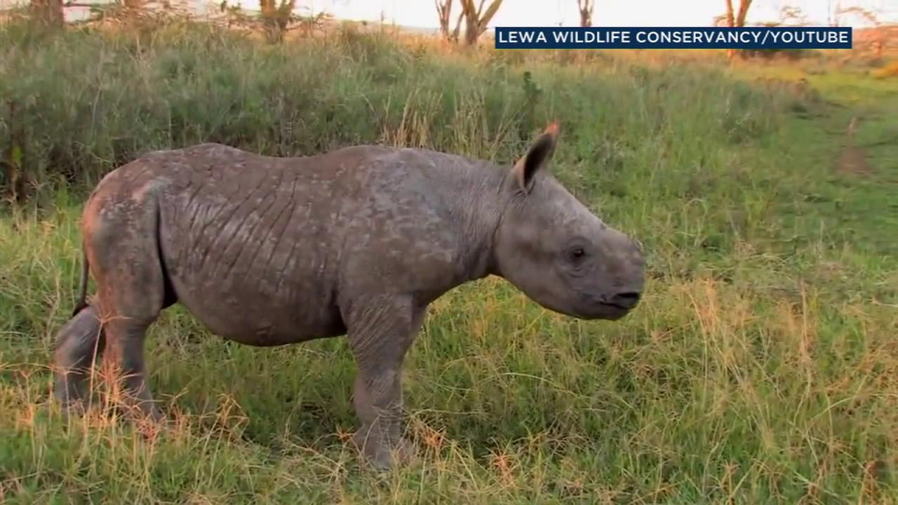 Bowling for Rhinos in Glendale will help raise money for endangered rhinoceros species.