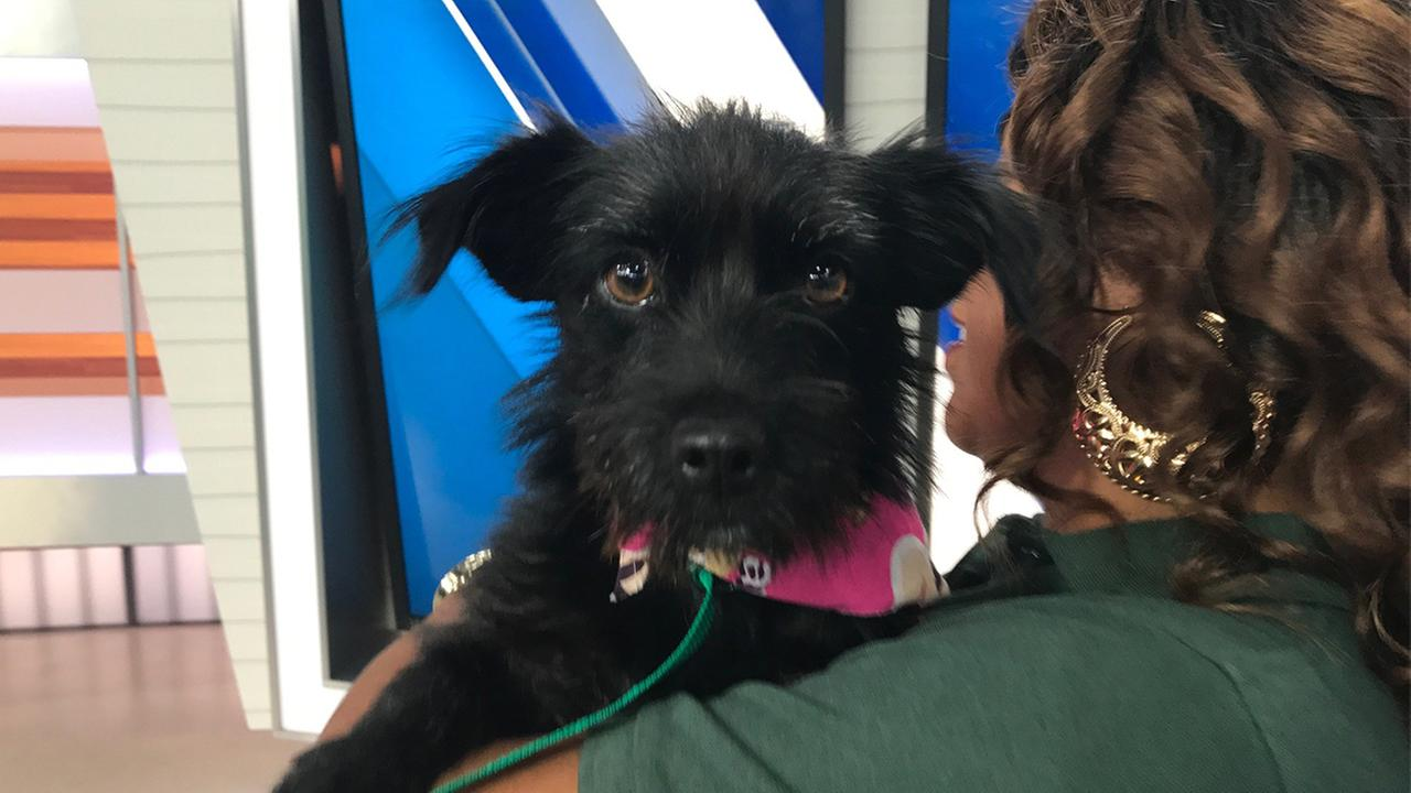 If you want to adopt Ashley, shes available at the North Central Animal Shelter at (213) 847-12416. Her ID is #A1716430.