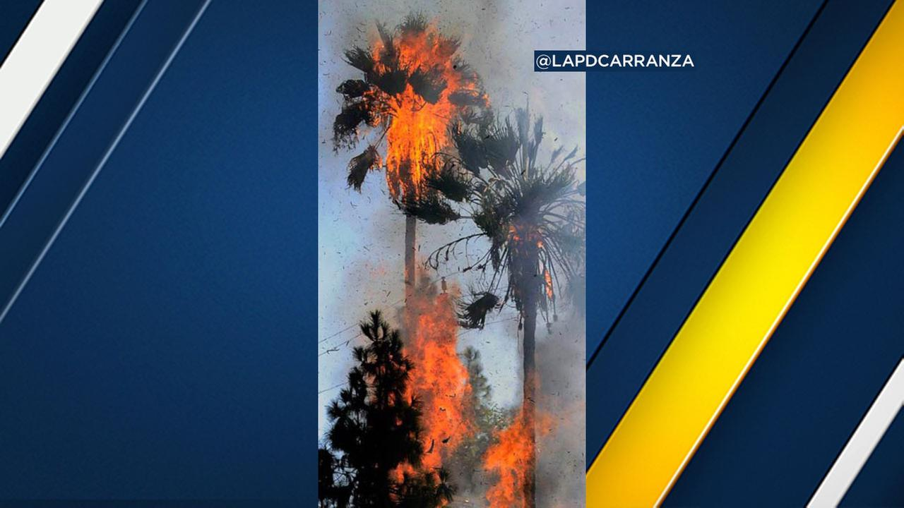 A person was arrested after intentionally setting a palm tree on fire in Van Nuys, police said.