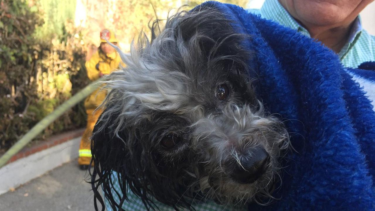 Lucky the dog experiences true luck after being rescued from house fire