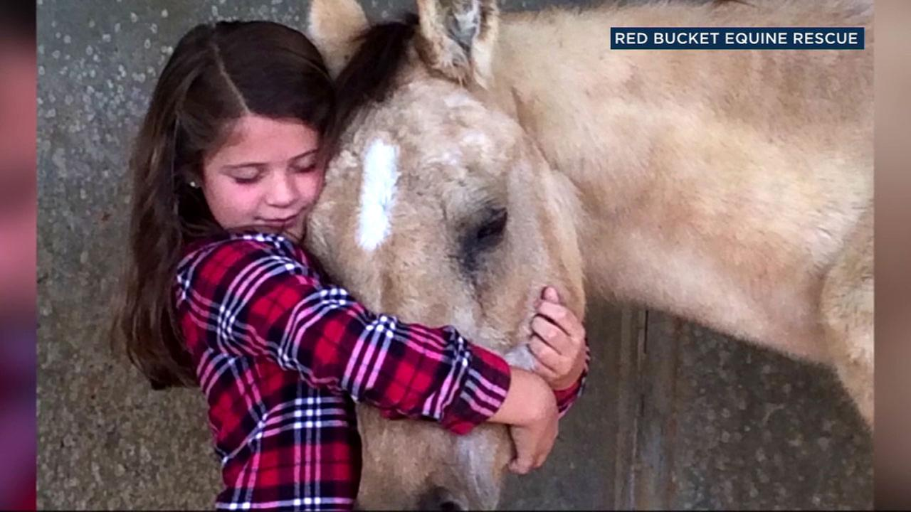 Eight-year-old Ryder Perryman gave up birthday presents this year and asked her friends to donate to help horses with Red Bucket Equine Rescue in Chino Hills.