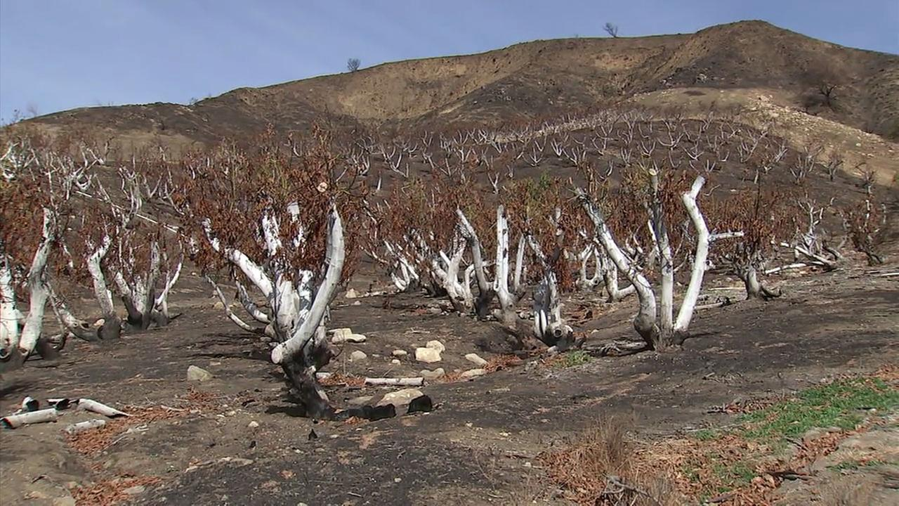 A destroyed farm is shown in Ventura County after it was damaged by the Thomas Fire.