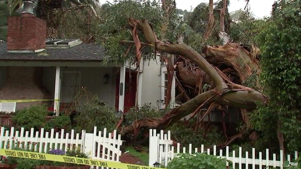 A tree crashed into the front of a home in Sherman Oaks on Thursday, March 22, 2018.