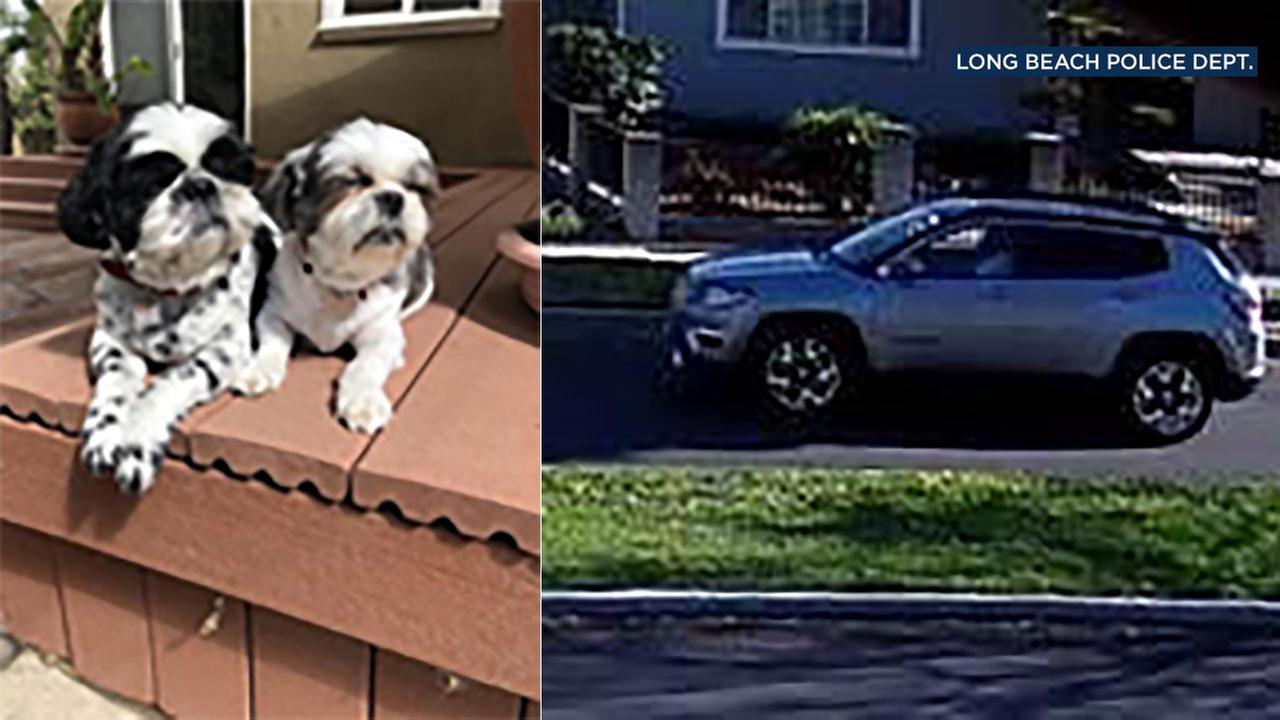 Two Shih Tzu dogs were taken from a home in Long Beach and police need help in tracking down the possible suspects.
