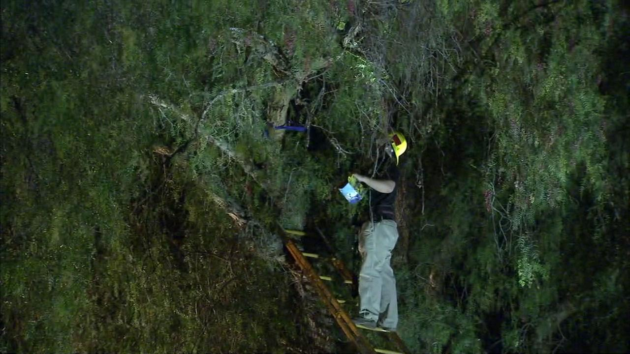 Rescuers try to get a woman to come down from a tree in Canoga Park on Monday, May 14, 2018.