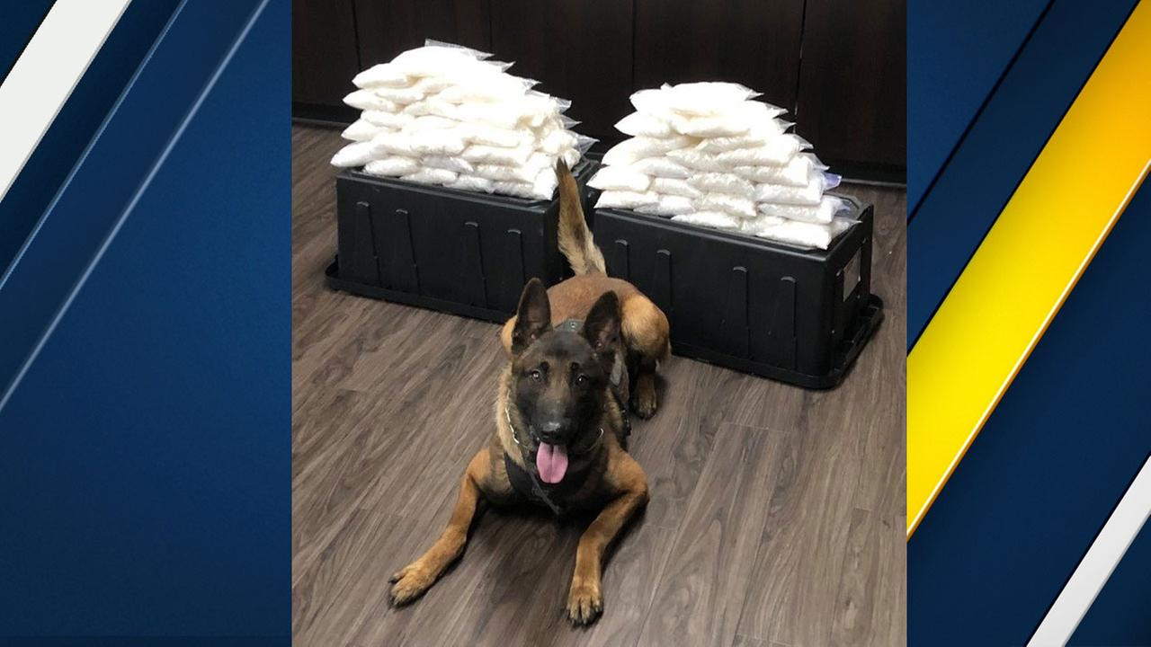 West Covina police K-9 Rye is shown with the drugs he helped find behind him.
