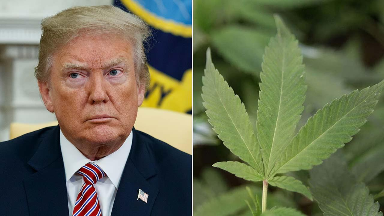 (Right) A marijuana leaf is seen in this file photo. (Left) President Trump listens during a meeting at the White House, Tuesday, April 10, 2018.