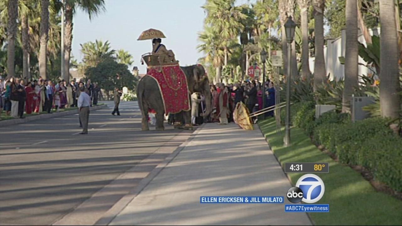 Animal rights activists are urging Huntington Beach to investigate after an elephant was used at a wedding ceremony despite a city ordinance prohibiting wild animal performances.
