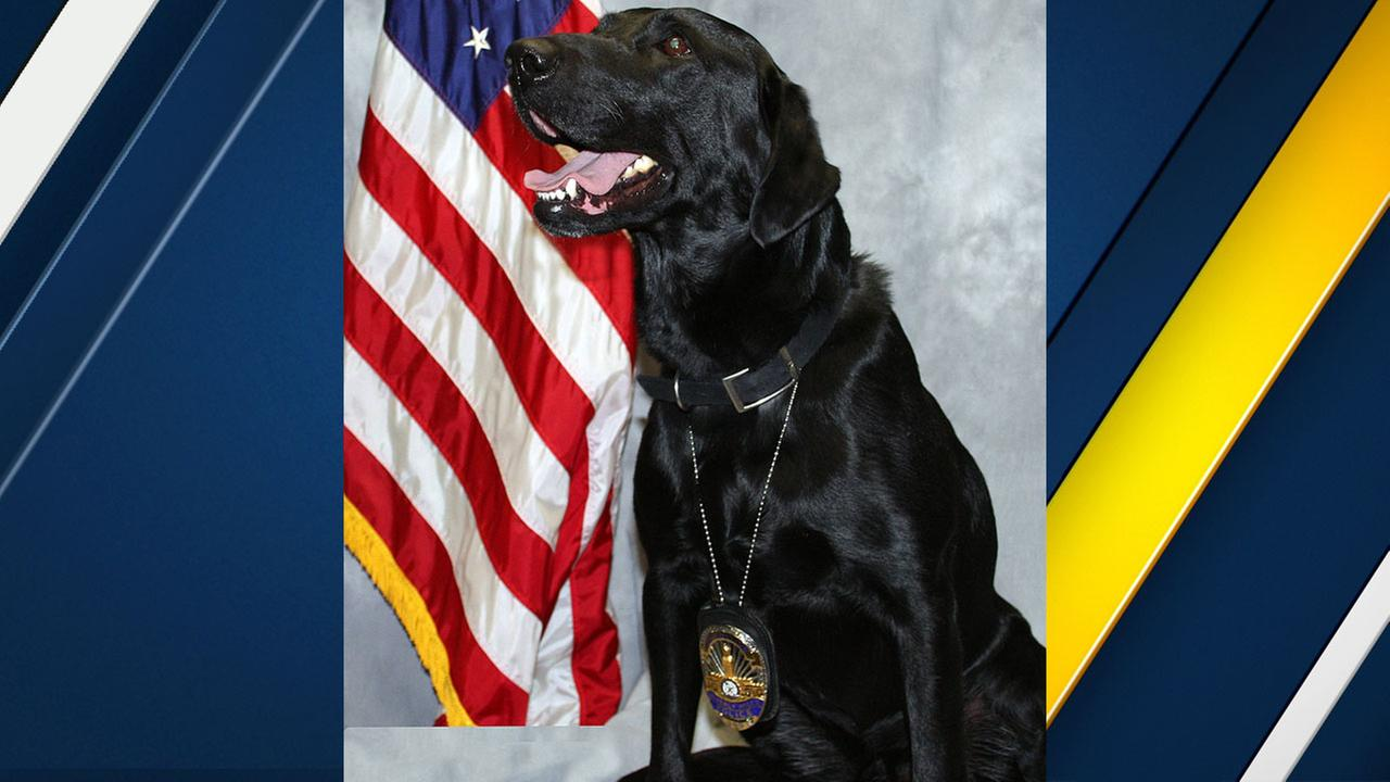 Jinx, a retired Beverly Hills Police Department K-9, is shown in a photo provided by the department.