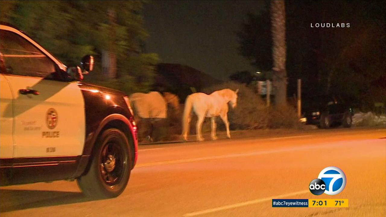 After receiving several calls, officers arrived to corral the horses that were on Foothill Boulevard near Wheatland Avenue.