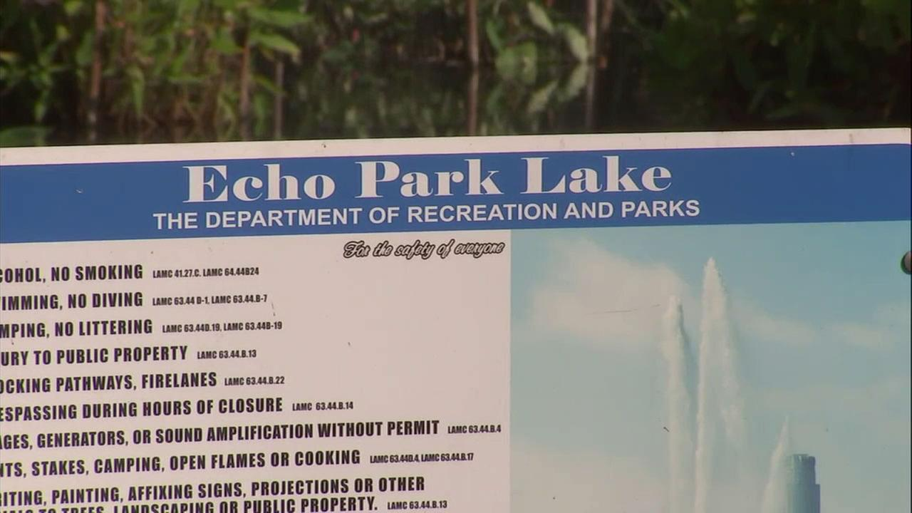 A body was found in Echo Park lake Thursday afternoon amid a search for a possible drowning victim.