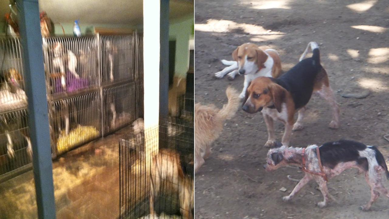 Animal Services officers took 93 dogs from a property in Arleta in July 2014.