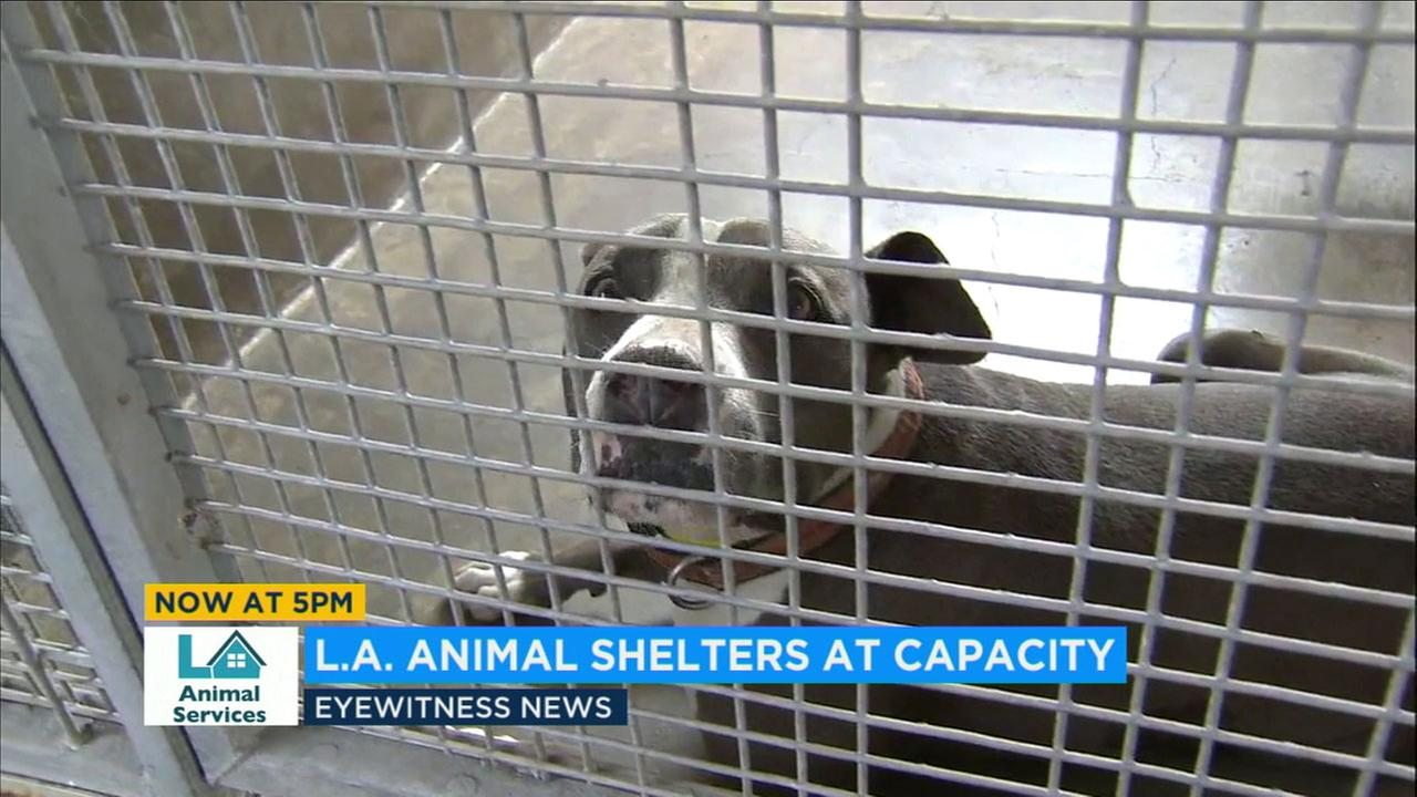 Los Angeles city animal shelters are at max capacity and need help.