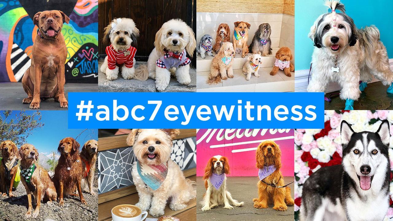 National Pet Day 2016: #ABC7Eyewitness photos