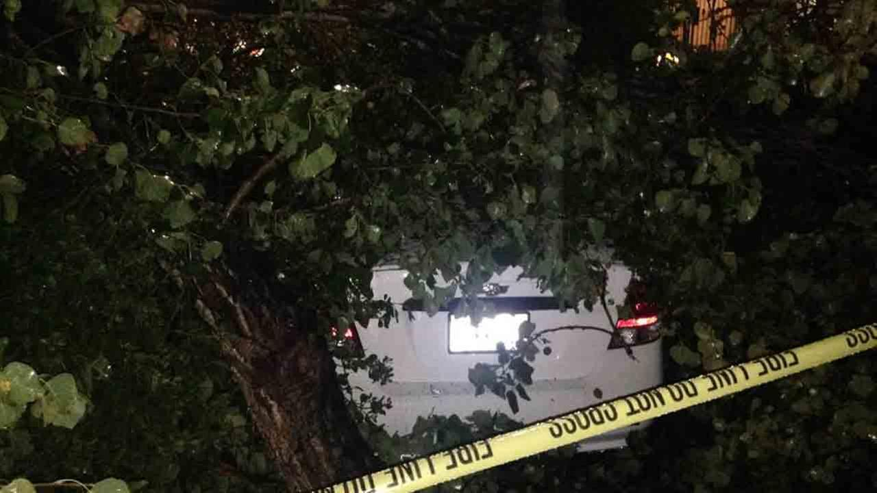 Heavy rain brought down a tree, smashing a car in Canoga Park Tuesday, Dec. 2, 2014.