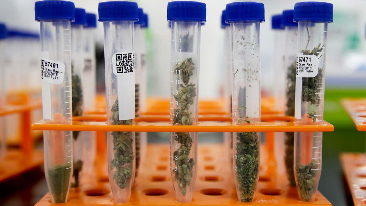In this Wednesday, Aug. 22, 2018, photo, marijuana samples are organized at Cannalysis, a cannabis testing laboratory, in Santa Ana, California.