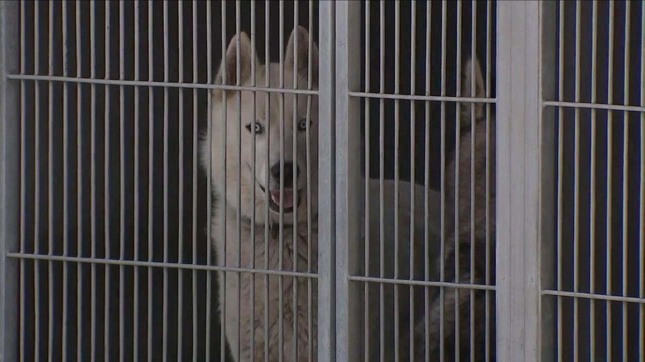 Volunteers are worried about the future of animals at the San Bernardino shelter after the facilitys manager was placed on leave.