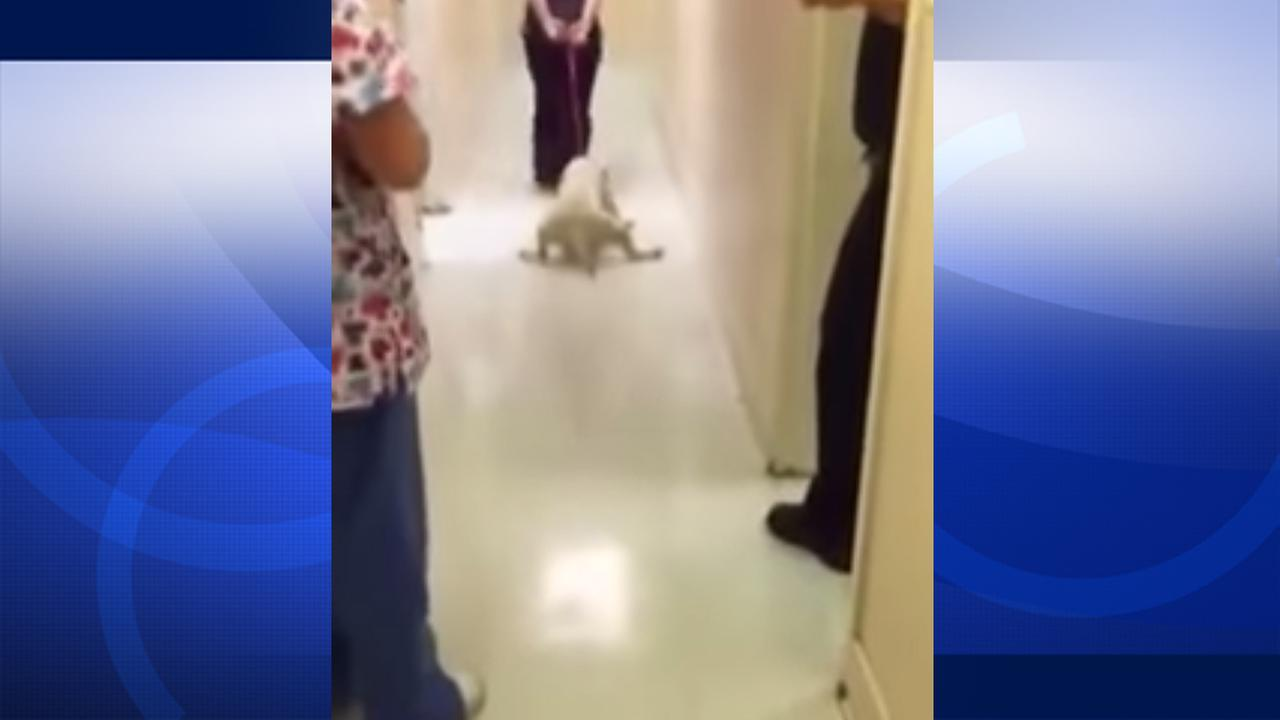 Mia the dog is shown being dragged down a hallway in this undated file photo.