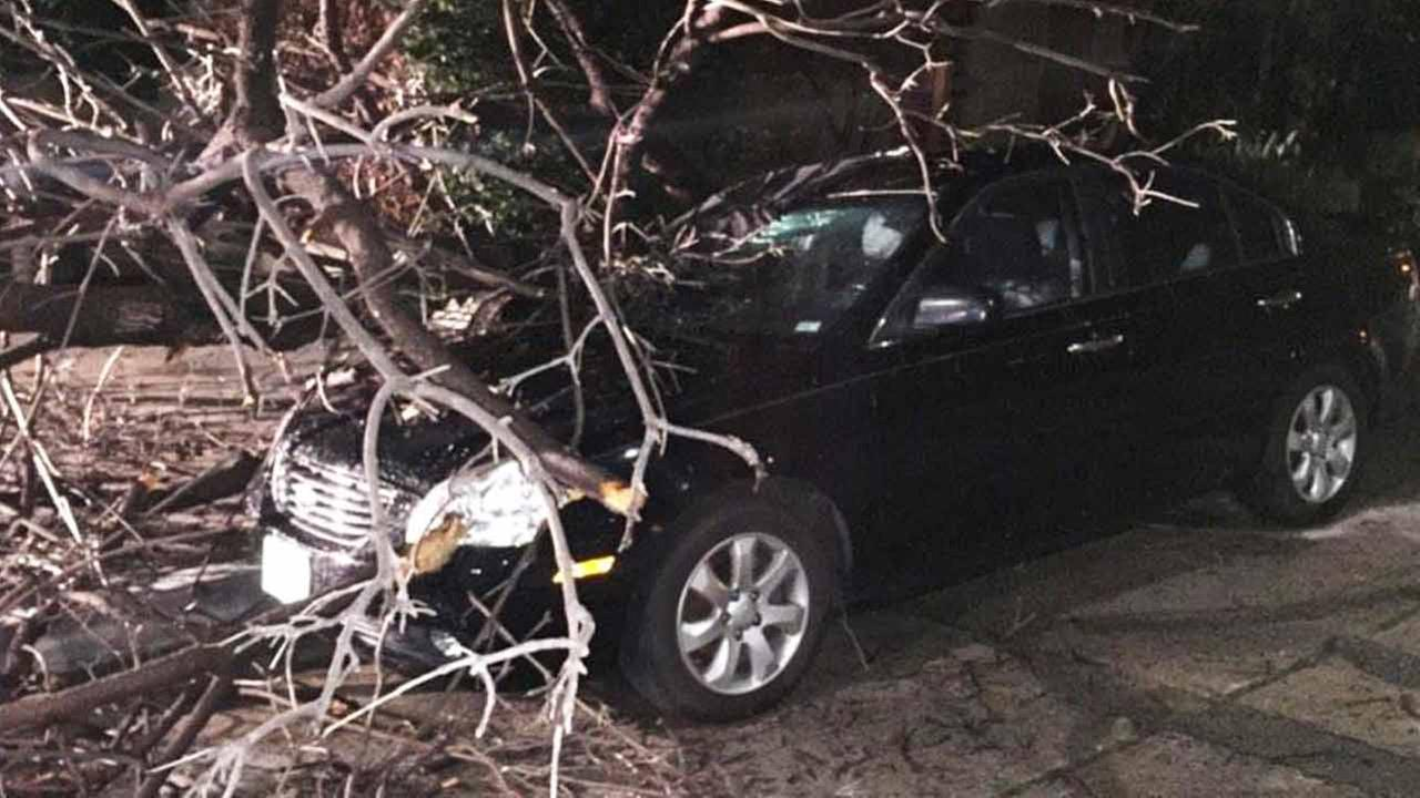 A car toppled over a tree in Silver Lake Sunday, Feb. 22, 2015.