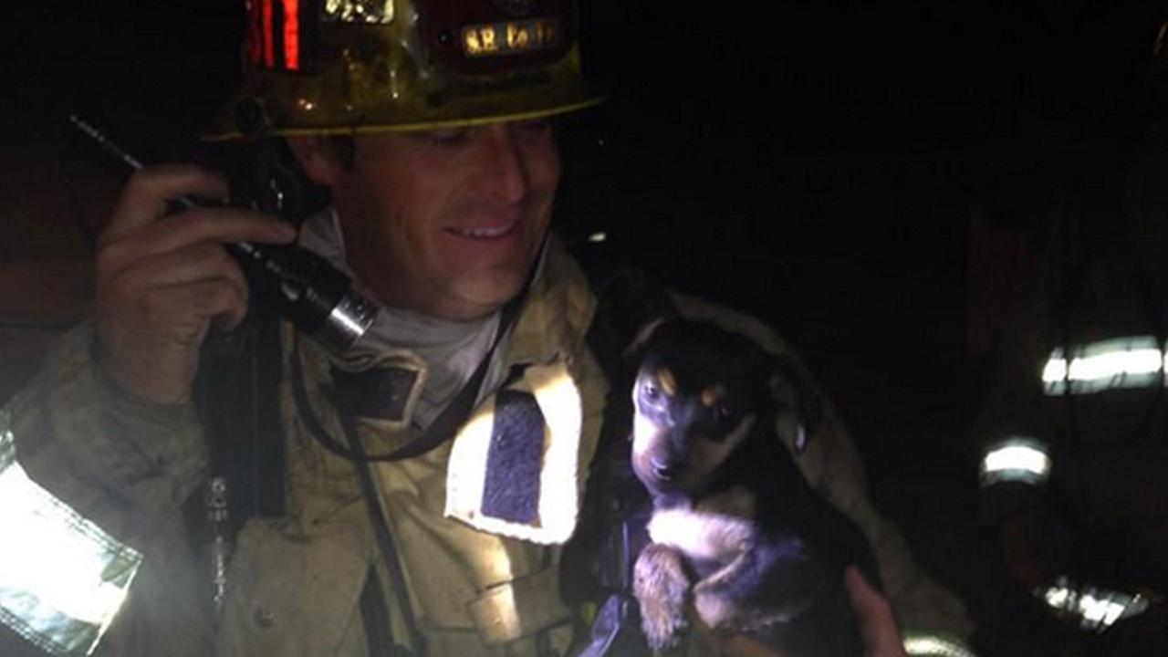 San Bernardino County firefighters rescued four puppies from a house fire that engulfed a home on Saturday, March 14, 2015.