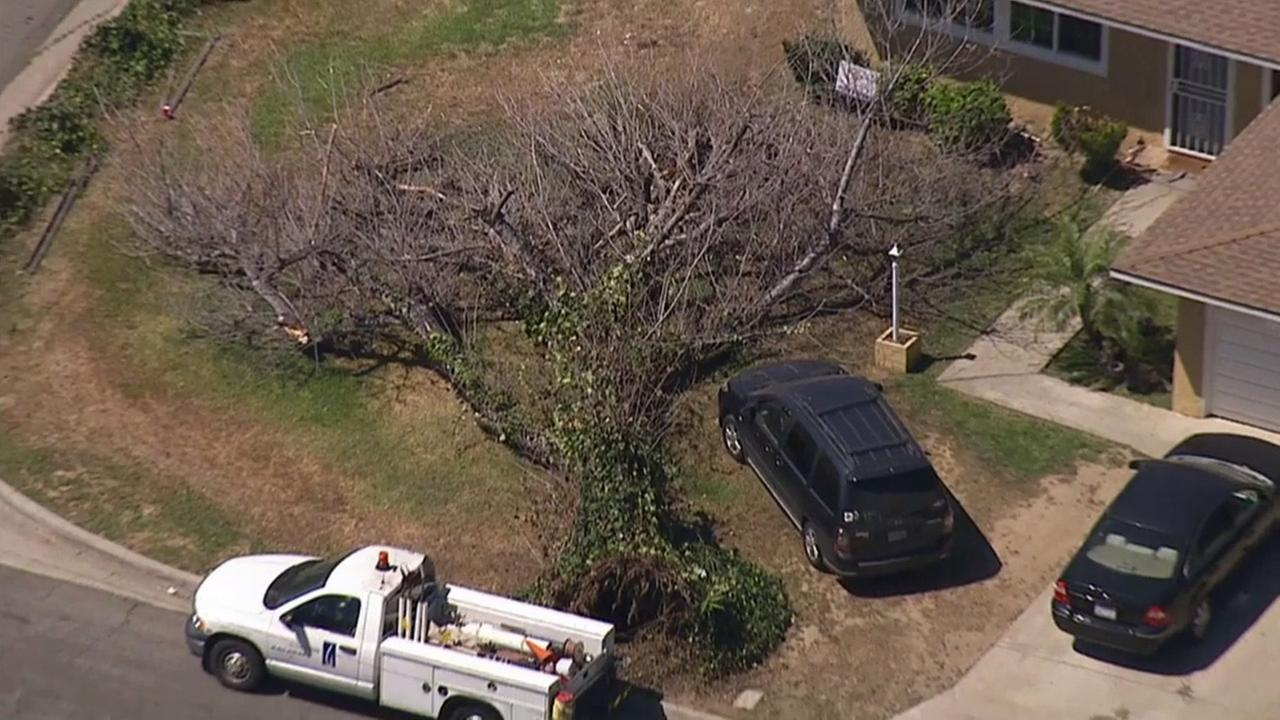 A fallen tree in Whittier injured two children on Friday, March 27, 2015.